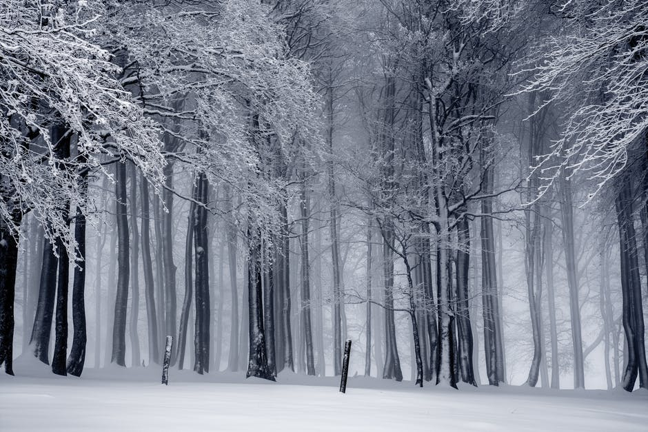 Winter Fall Prevention: Protecting Your Aging Loved One from Injury this Season